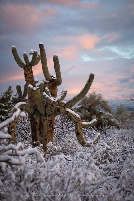 ccw-Snow2013-255_web.jpg