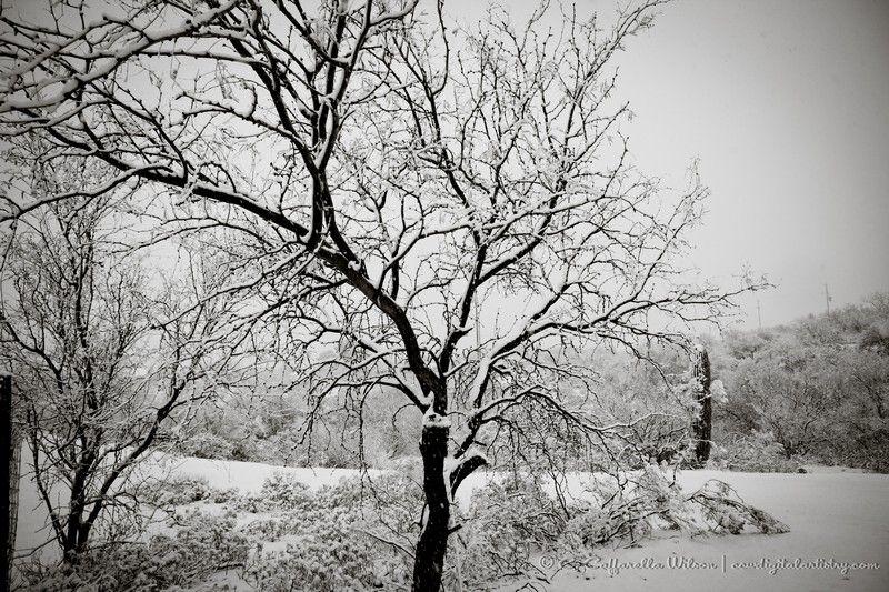 ccw-Snow2013-427_web.JPG